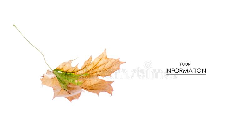 The autumn leaves pattern royalty free stock image