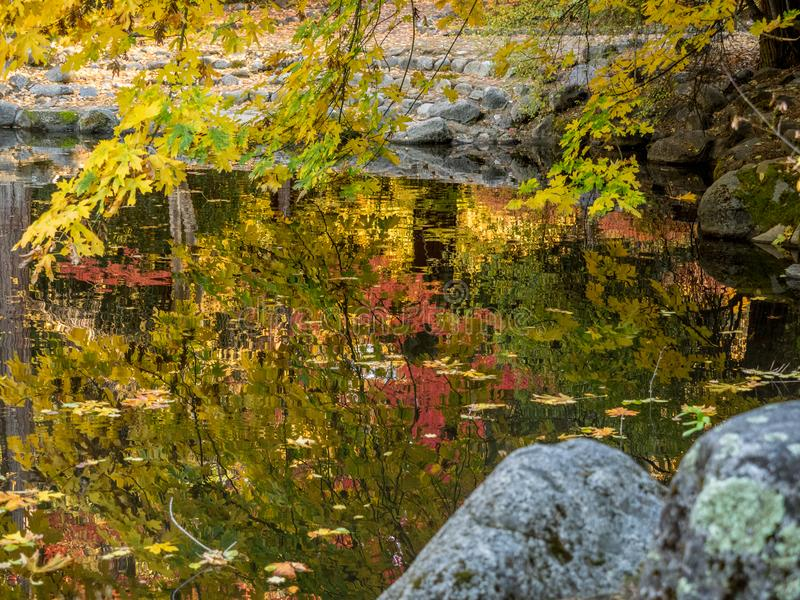 Autumn leaves in pond. Colorful autumn leaves are reflected in the water at the duck pond in Lithia Park in Ashland, Oregon stock image