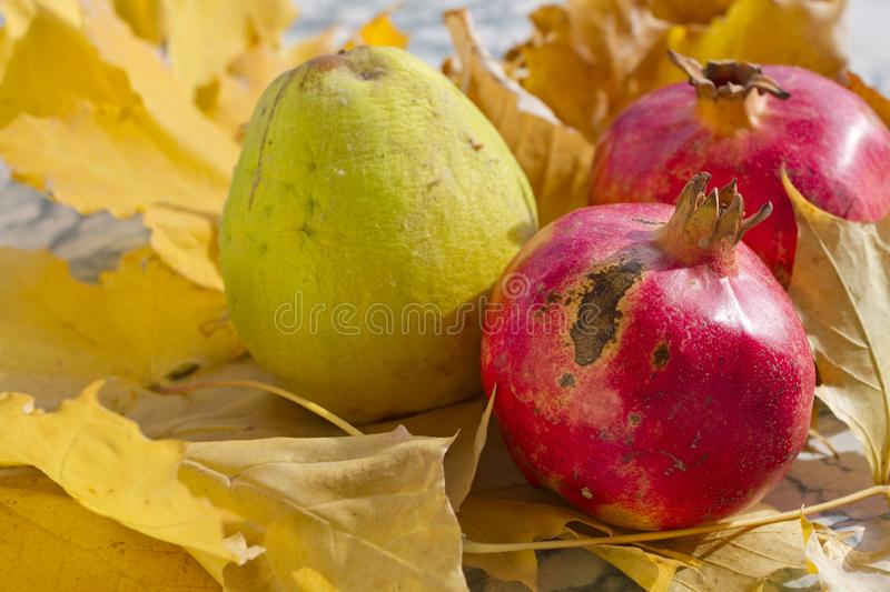 Autumn leaves, quince and pomegranate. Ripe organic pomegranate and quince in still life with yellow leaf. Seasonal background stock images