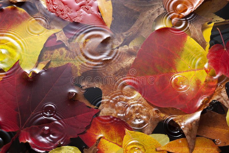 Autumn Leaves Rain Background imagenes de archivo