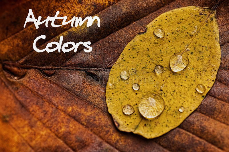 Autumn Leaves With Rain Droplets Autumn Colors Concept Wallpaper imagens de stock royalty free