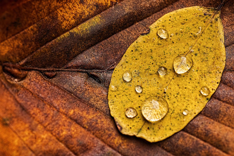 Autumn Leaves With Rain Droplets Autumn Concept Wallpaper fotografia de stock royalty free