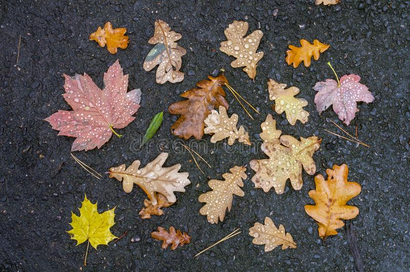 Autumn leaves with raindrops on wet asphalt background. Top view stock photo