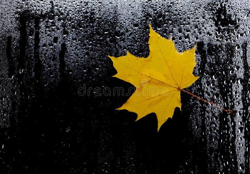 Autumn leaves for rainy glass. concept of fall season. royalty free stock photos