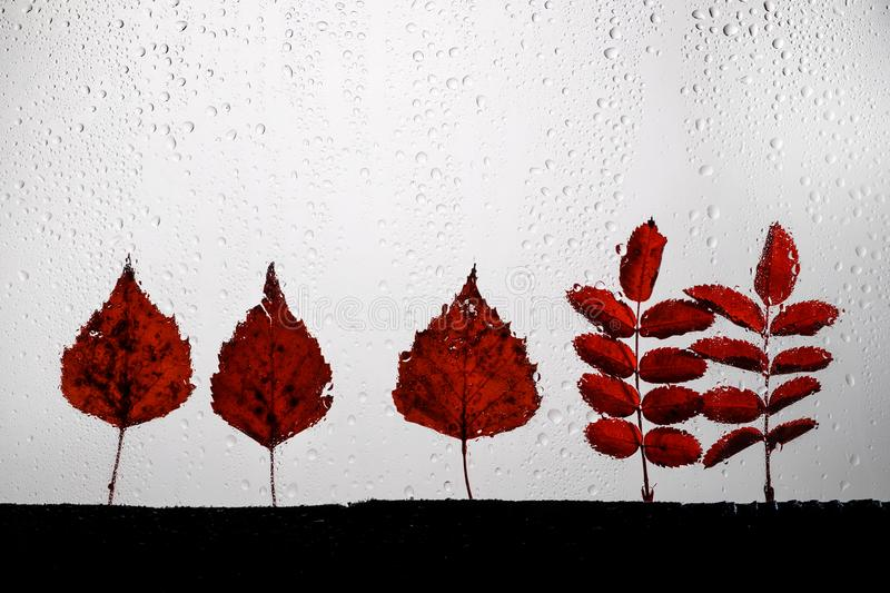 Autumn leaves for rainy glass. concept of fall season. royalty free stock photography