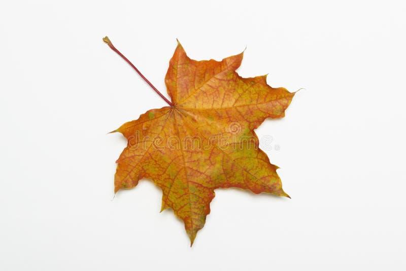 Autumn leaves. stock photos