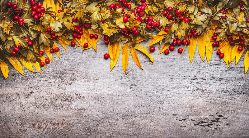 Autumn leaves and red fall berries on gray stone background, top view stock photo