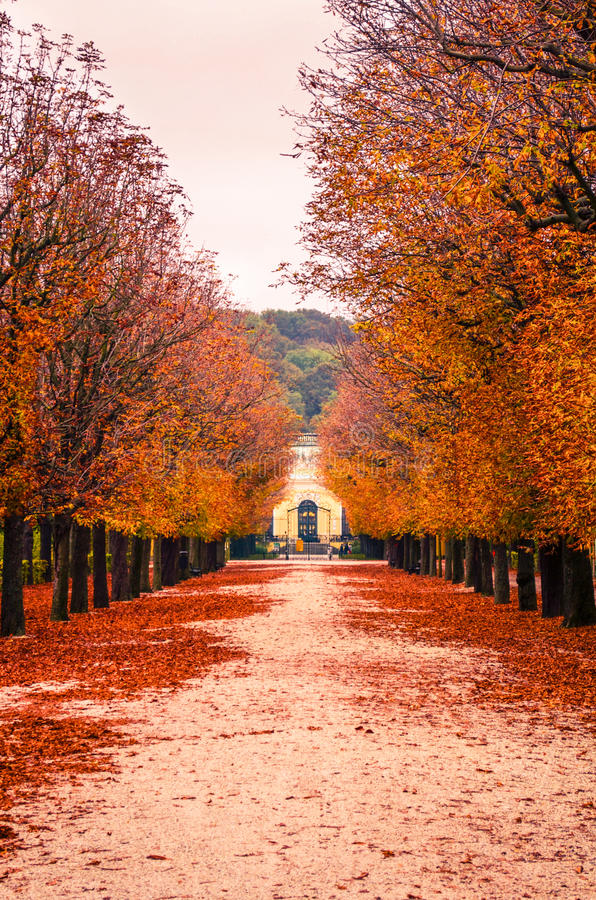Download Autumn Leaves Stock Photo - Image: 83713228
