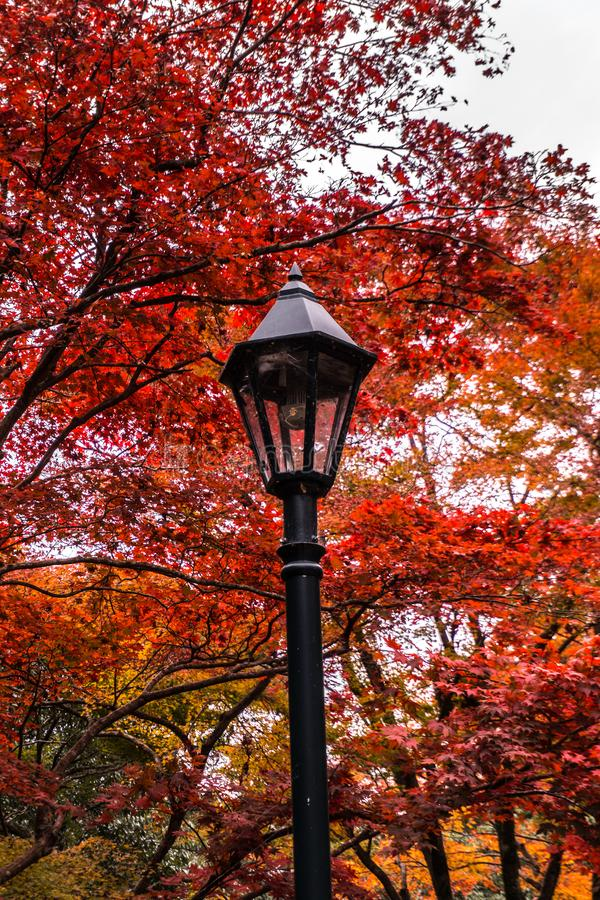 Autumn leaves with red and yellow tones over a lamp in a forest stock photo