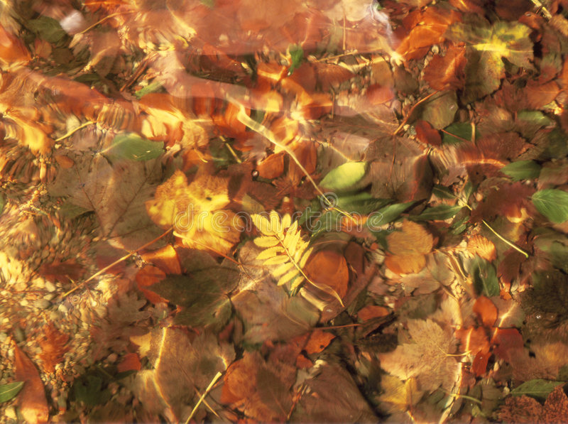 A Golden leave reflecting through clear, Loch water stock image