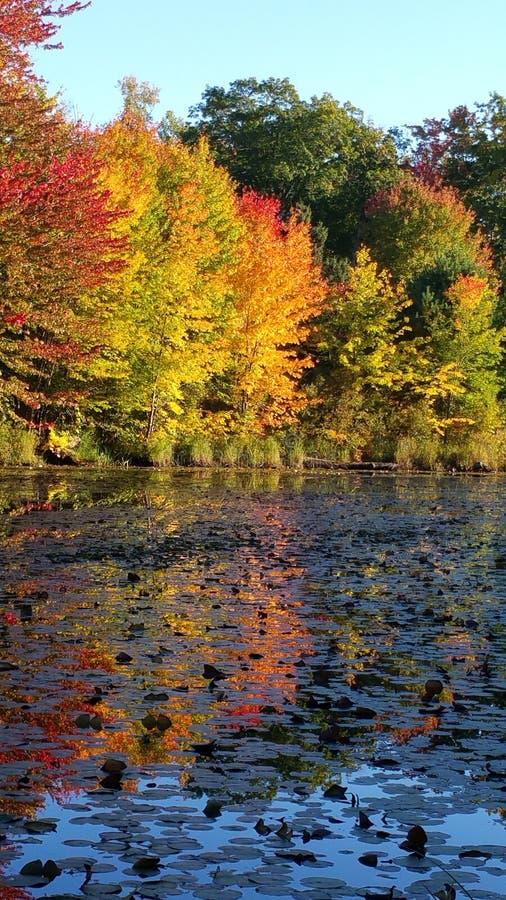 Autumn Leaves reflete na lagoa fotografia de stock