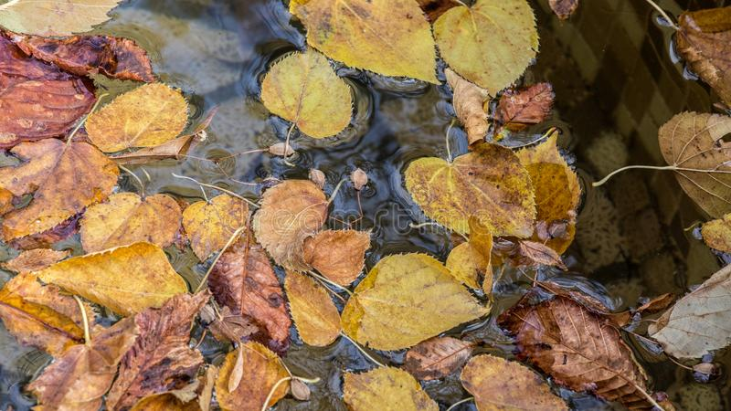 Autumn leaves on rippled water surface stock photo