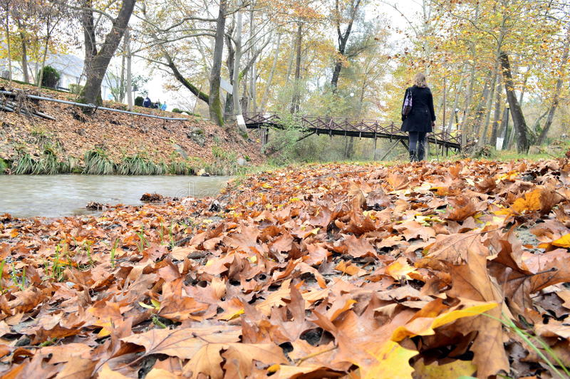 Download Autumn Leaves Beside The River Stock Photo - Image: 46976912