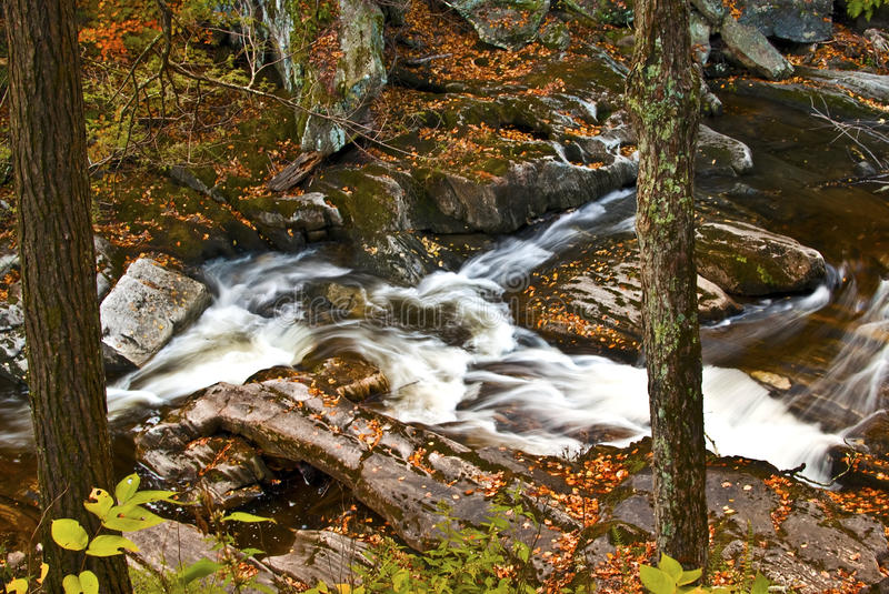 Autumn leaves by river stream royalty free stock photo