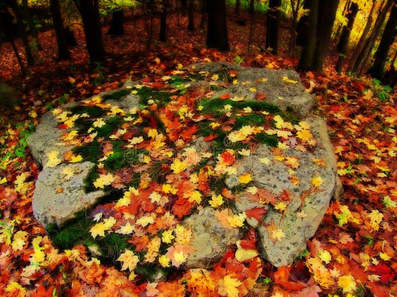 Autumn Leaves on Rock stock photo