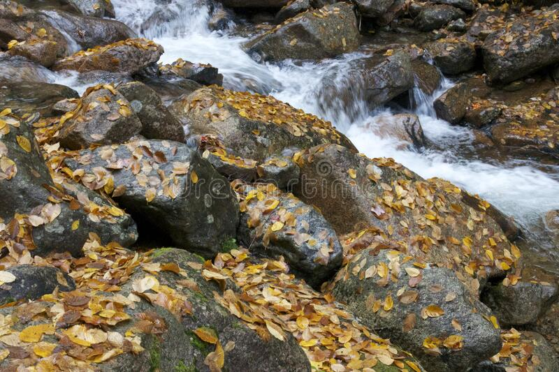 Autumn leaves on rocks in stream royalty free stock image