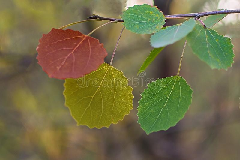 Autumn Leaves Rosso, giallo, verde fotografia stock libera da diritti