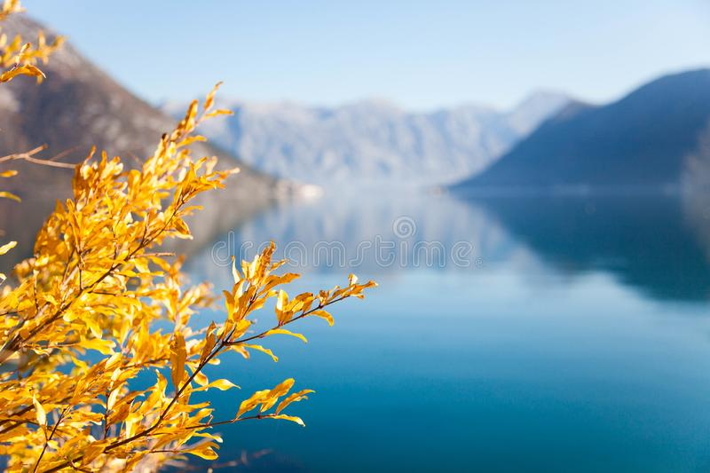 Autumn leaves on sea background. Yellow and orange tree near blue water. Fall beach. With amazing reflections of mountains. The Kotor Bay, Montenegro. Copy stock images