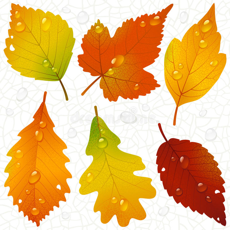Download Autumn Leaves And Seamless Vein Background Stock Images - Image: 15670694
