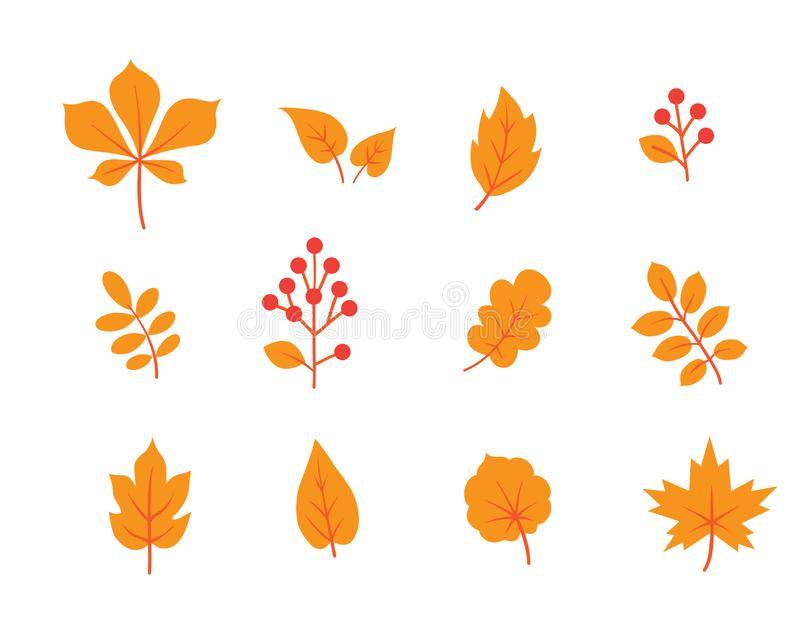 Autumn leaves set. Fall leaf and berries icons. Floral nature symbols over white background stock illustration