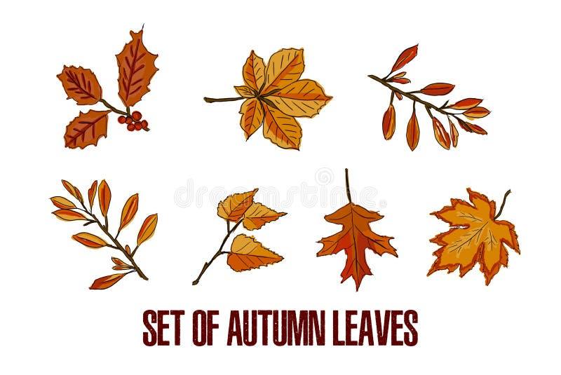 Autumn Leaves Set op de witte achtergrond wordt geïsoleerd die stock illustratie