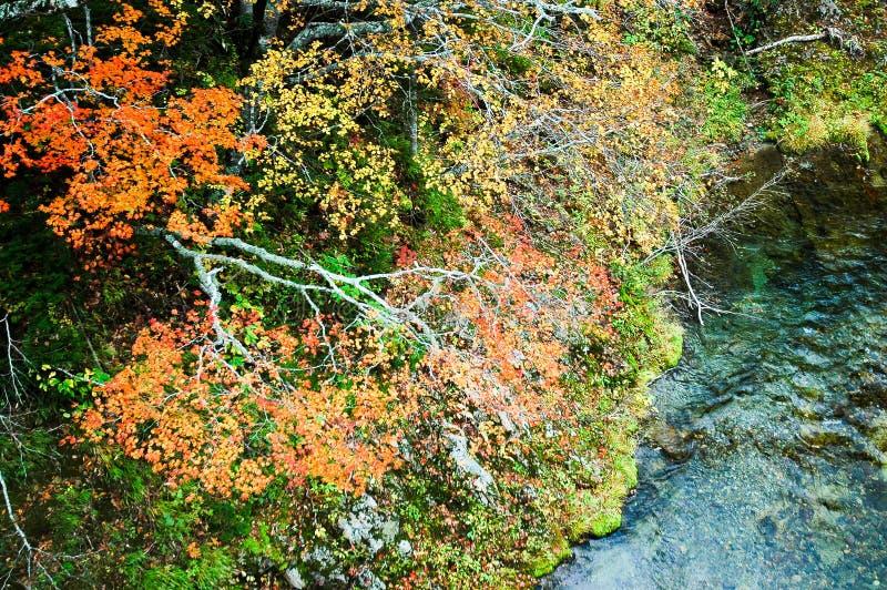 Autumn Leaves in Shiretoko, Hokkaido, Japan royalty-vrije stock foto