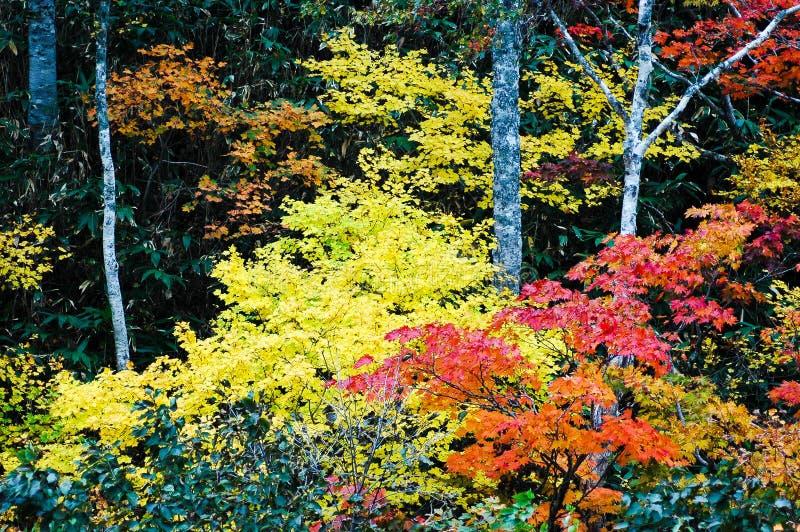 Autumn Leaves in Shiretoko, Hokkaido, Japan stock fotografie