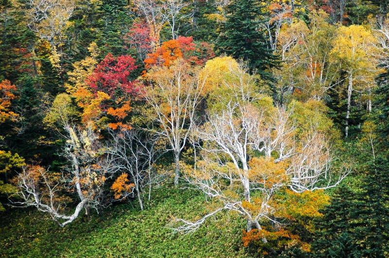 Autumn Leaves in Shiretoko, Hokkaido, Japan royalty-vrije stock afbeelding