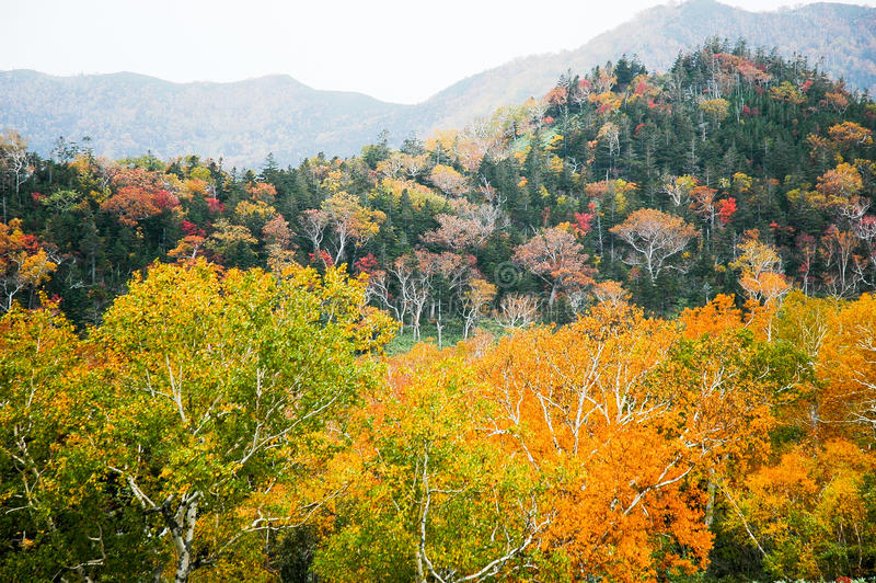 Autumn Leaves at Shiretoko Pass, Hokkaido, Japan royalty free stock photography