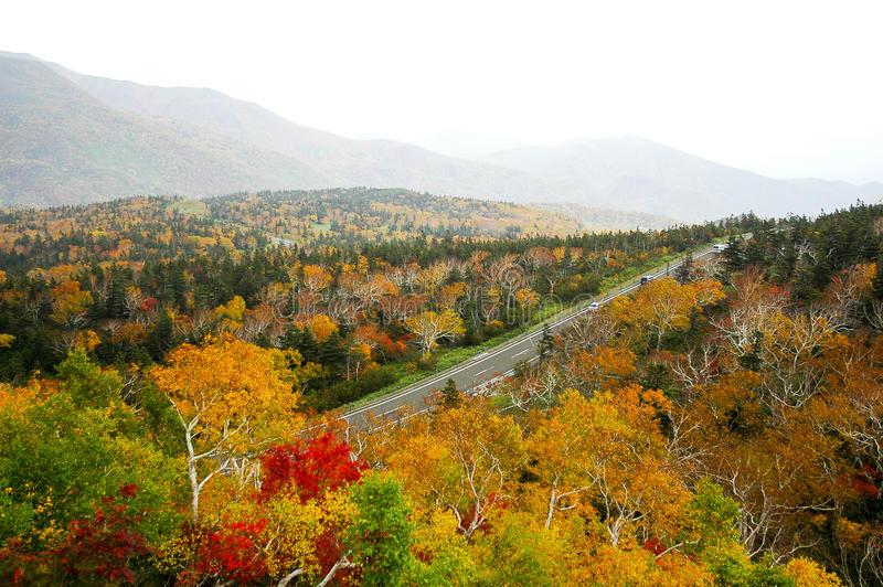Autumn Leaves at Shiretoko Pass, Hokkaido, Japan stock image