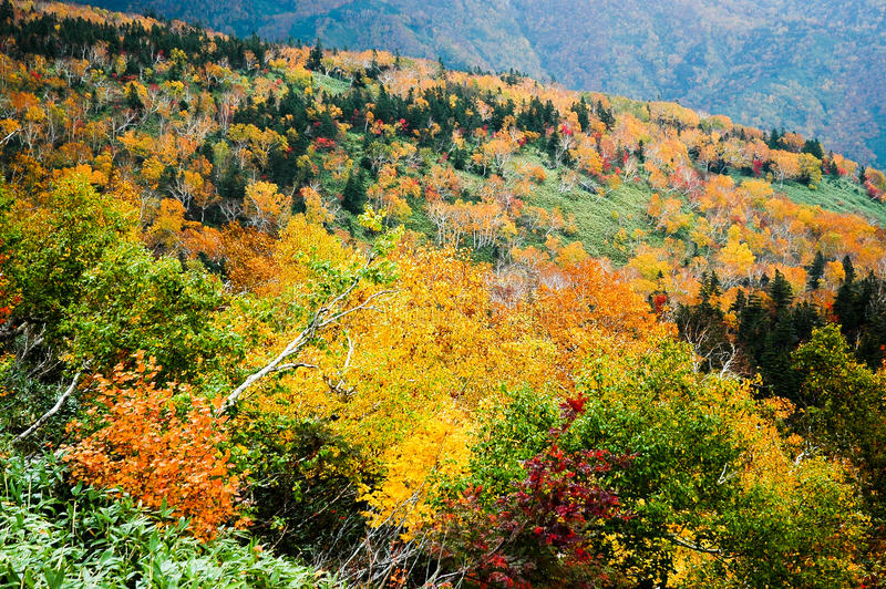 Autumn Leaves at Shiretoko Pass, Hokkaido, Japan stock photography