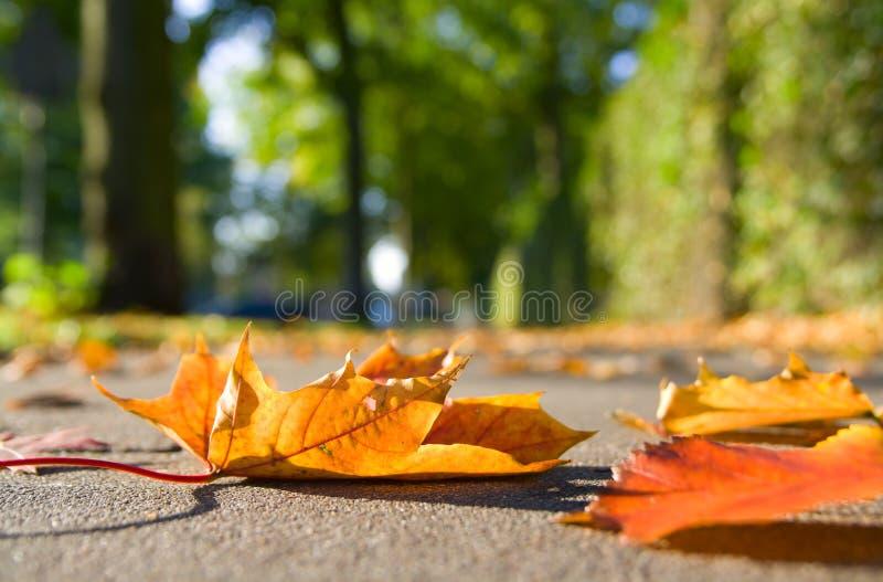 Autumn leaves on sidewalk stock image