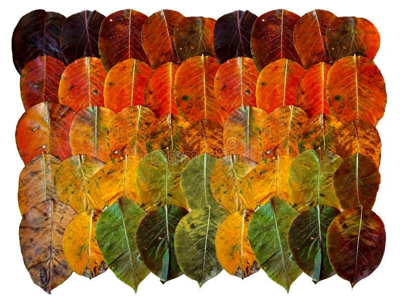 Autumn Leaves Sistema de la lona de la pendiente de las hojas de otoño de la mentira oscura, anaranjada, amarilla, verde en fila  fotos de archivo libres de regalías