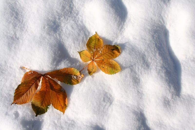 Autumn leaves on the snow. stock photo