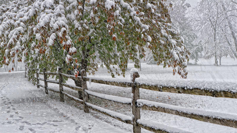 Download Autumn Leaves And Snow Covered Tree Stock Photo - Image: 31772220