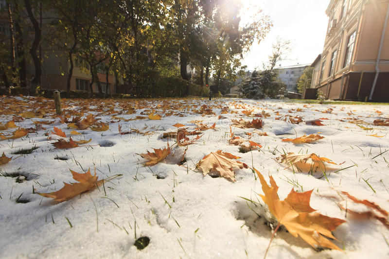 Autumn leaves on snow stock images