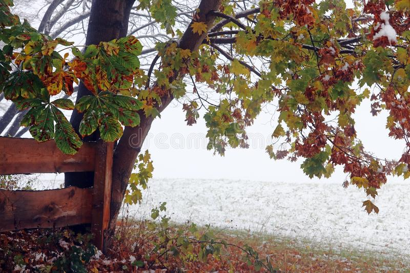 Autumn leaves in snow and fog stock images