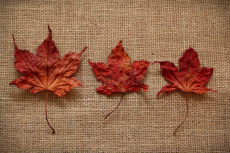 Download Autumn Leaves Sobre Fondo Del Yute Imagen de archivo - Imagen de planta, frontera: 42445671