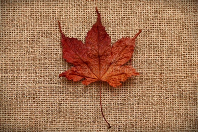 Download Autumn Leaves Sobre Fondo Del Yute Imagen de archivo - Imagen de borde, contexto: 42446237