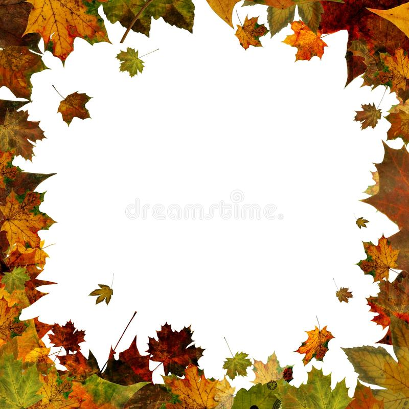 Autumn leaves square frame border isolated on white stock image