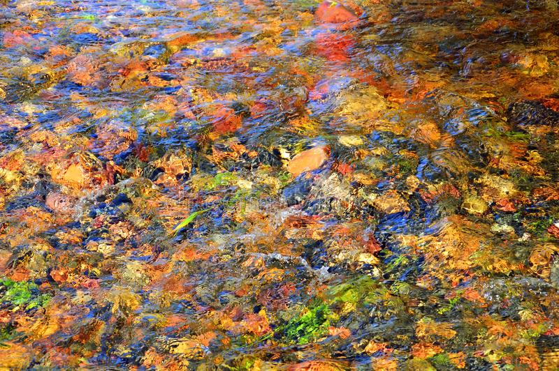 Autumn leaves and Stones at the bottom of the river. The texture of the water and bright the color of the leaves. Autumn collectio royalty free stock photos