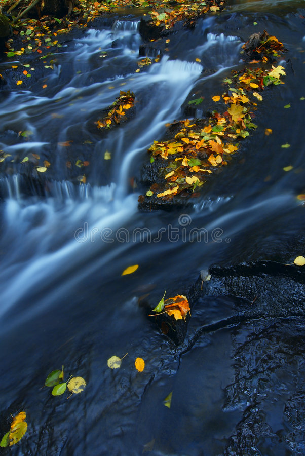 Autumn leaves on stream royalty free stock photography