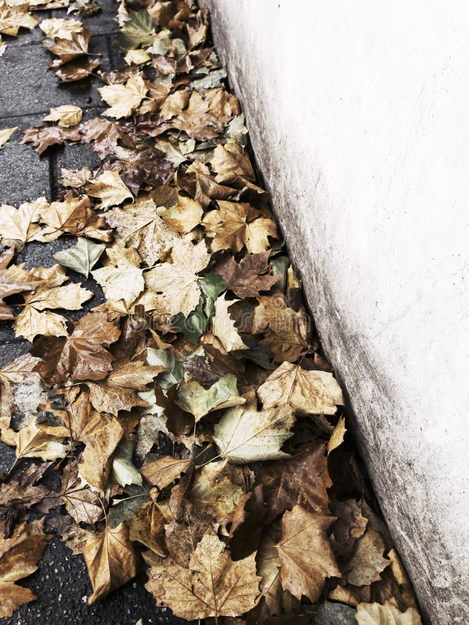 Autumn leaves on the street royalty free stock photo