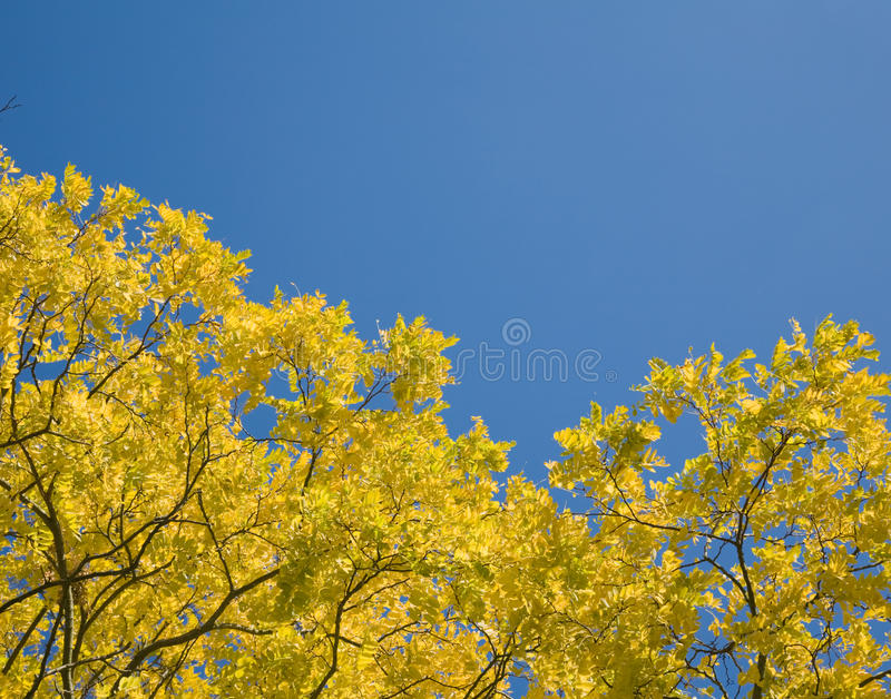 Download Autumn Leaves With Sun Shining Stock Image - Image: 10948195