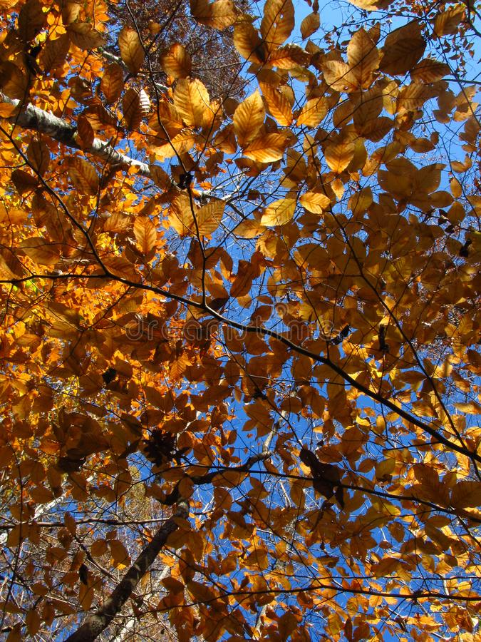Autumn Leaves in the Sunlight stock photography