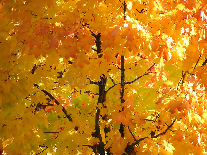 Autumn leaves on a sunny day stock image