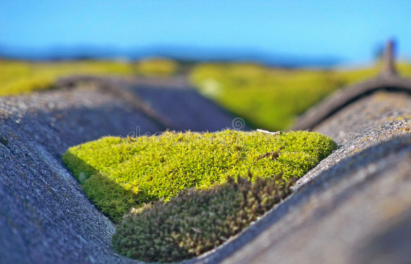 Autumn leaves at sunset. Autumn leaves illuminated by sunlight against the roof and moss stock photography