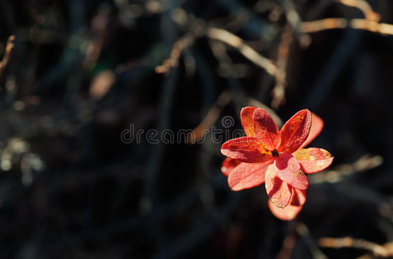 Download Autumn Leaves In Sunset Light Stock Image - Image: 37042989
