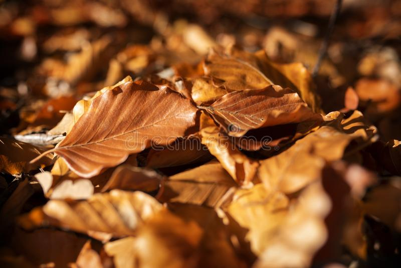 Autumn leaves in sunshine_001 stock images