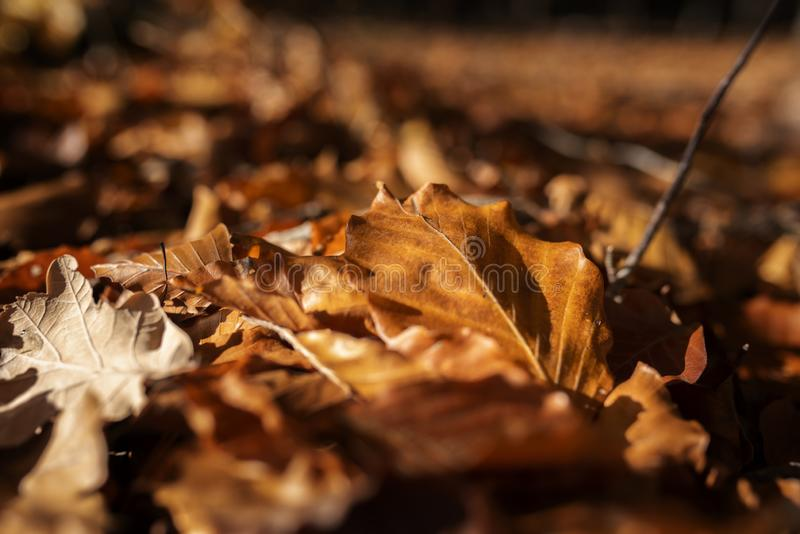 Autumn leaves in sunshine stock photography